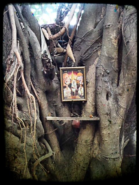 Träd som altare