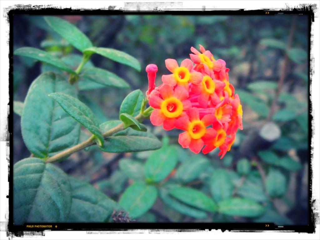 Indisk blomma