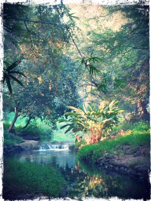 Osho Teerth Garden 1