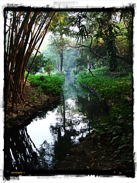 Osho Teerth Garden 2