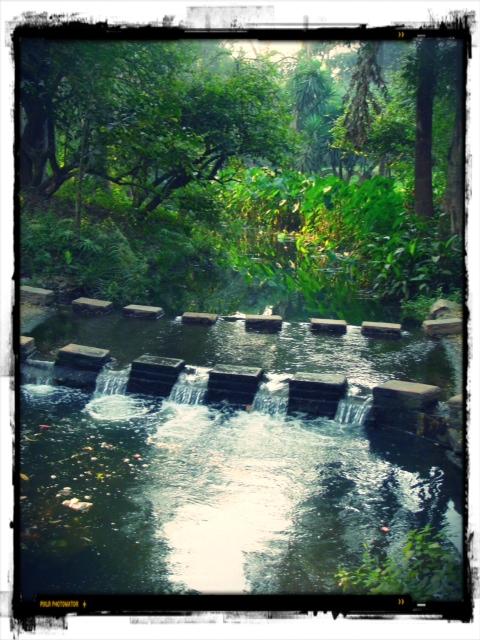 Osho Teerth Garden 5
