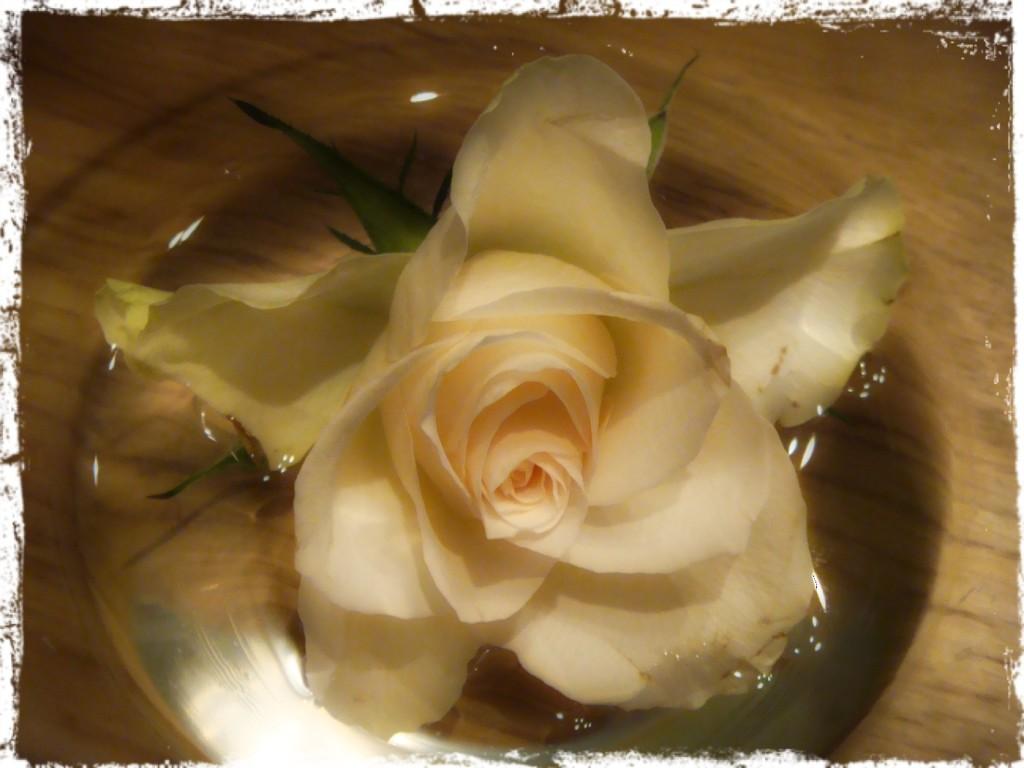 Romantisk ros