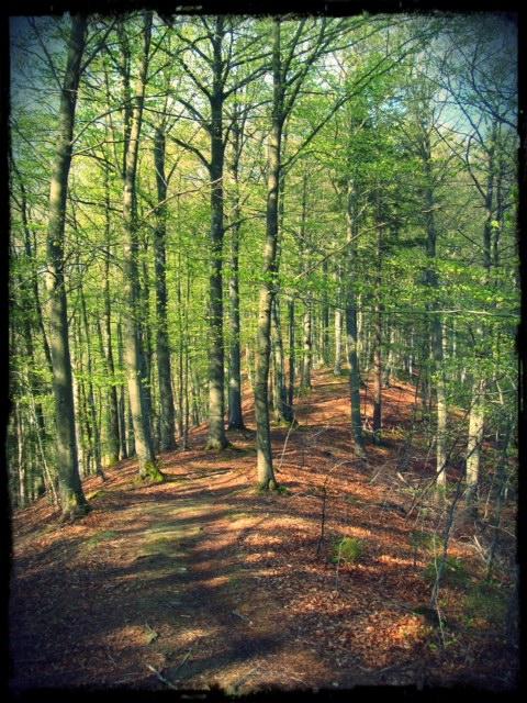 Naturreservatet Hannabadsåsen
