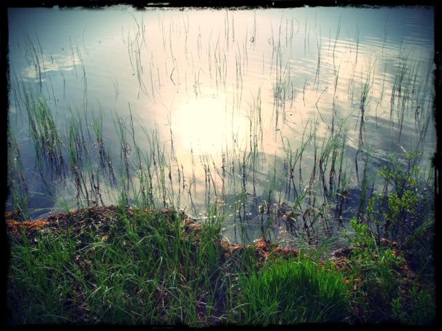 Solkatt i sjön