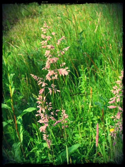 Vackert gräs!