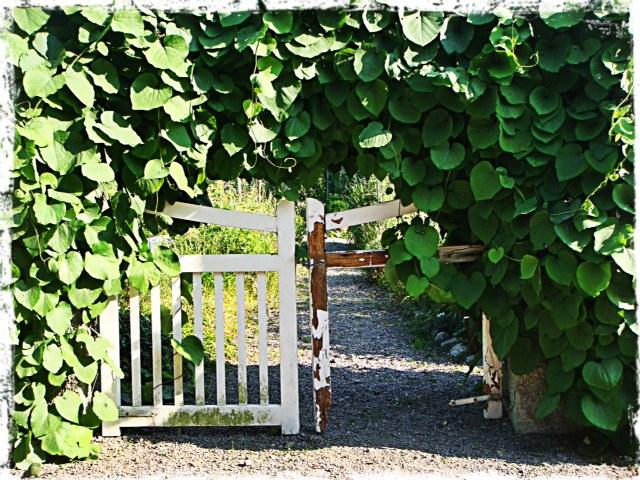 Bellmans trädgårdar
