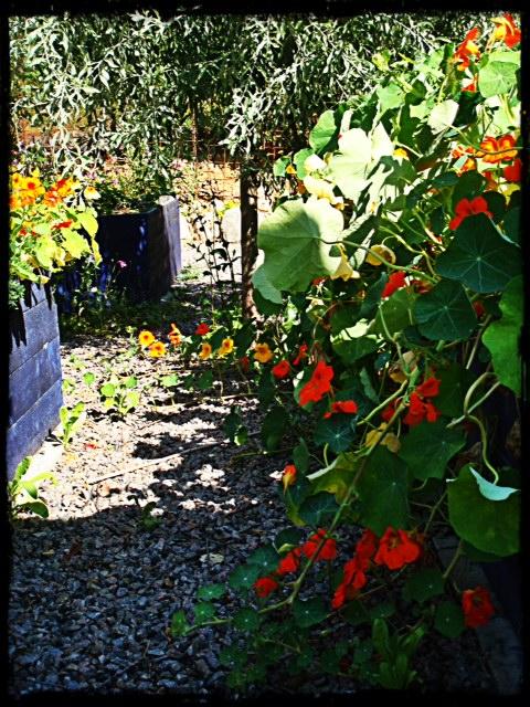 Blommor i överdåd