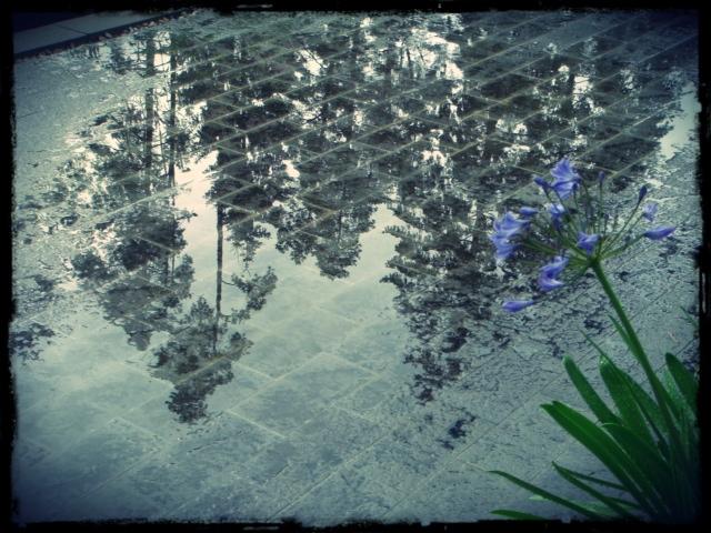 Tallar reflekterade i regn