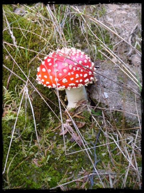 Vacker svamp