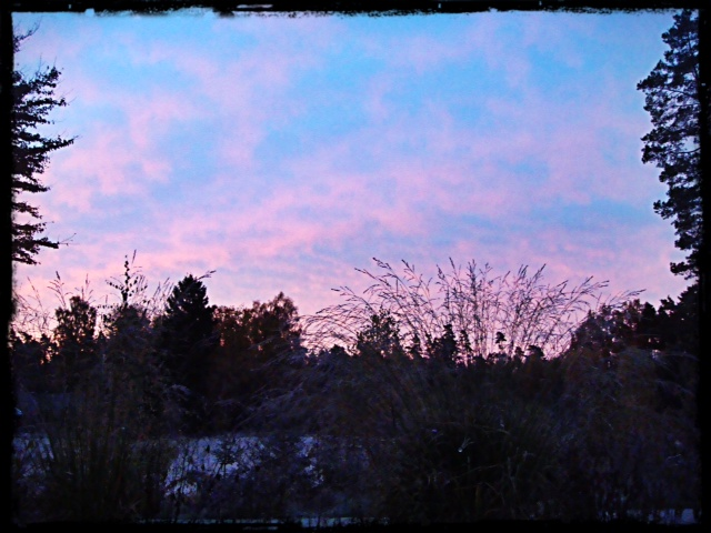 Morgonens utsikt från mitt vardagsrum