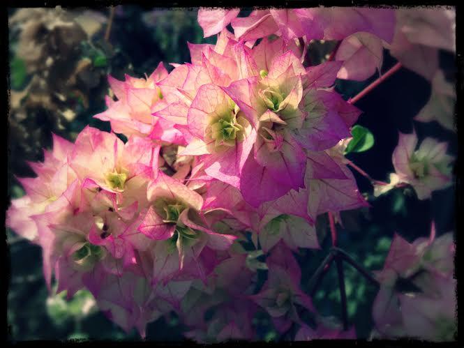 Romantisk blomma på Dolanos terrass