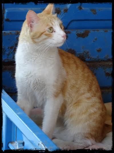 Stilig katt