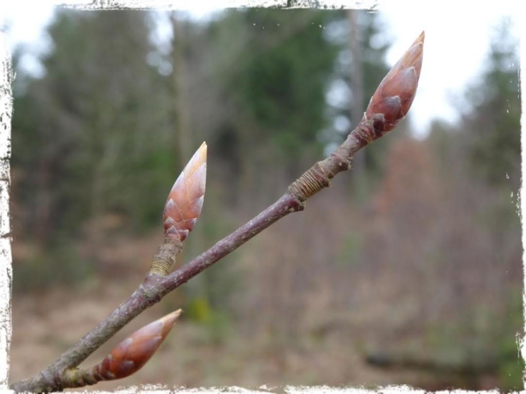 """""""Visst gör det ont när knoppar brister. Varför skulle våren annars tveka?"""""""