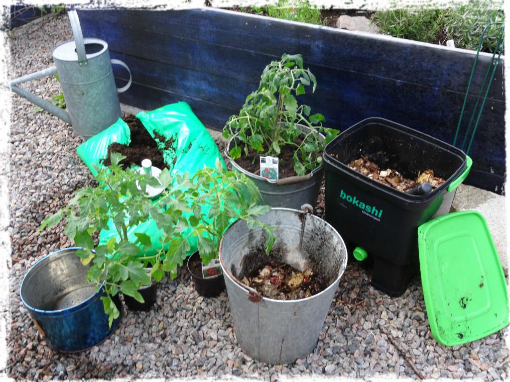 Tomatplantering på gång, 1, 140515