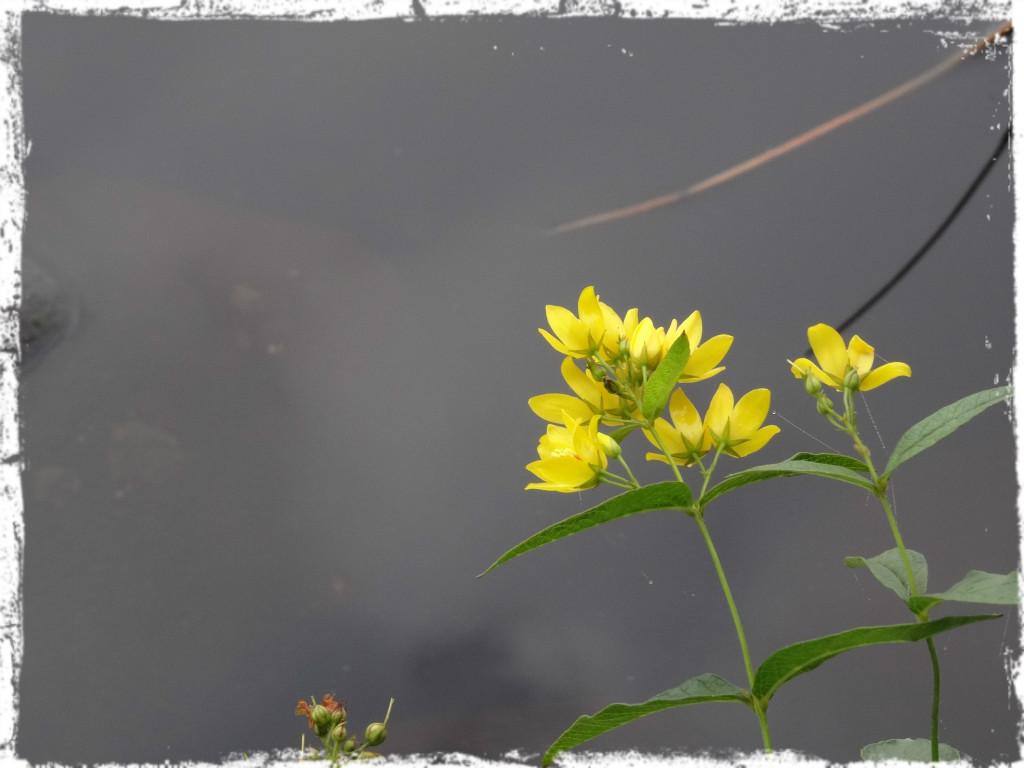 Vid vattnet