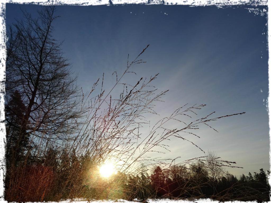 Kall morgon, 141122