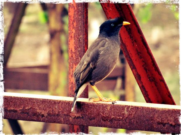 Ännu en fågel L