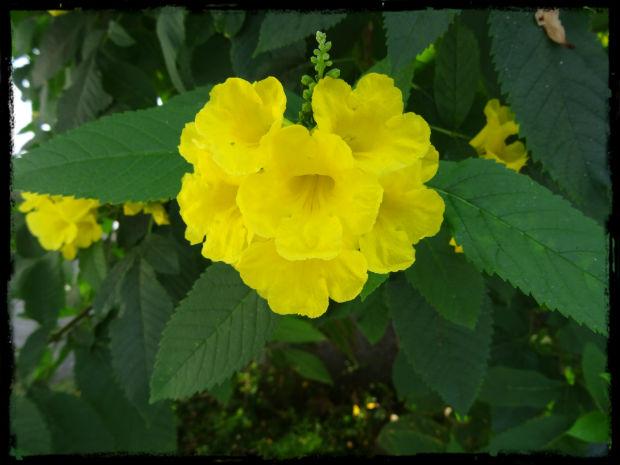 Gul blomma vid poolen L