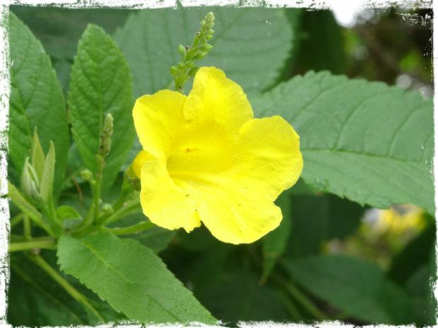 Gul blomma vid poolkanten L