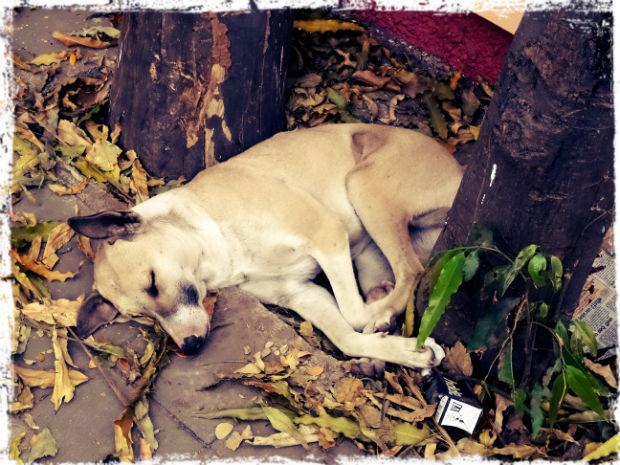 Sovande hund L
