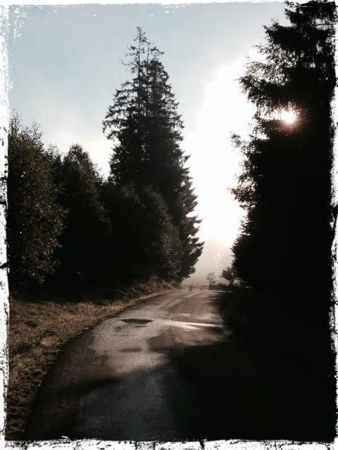 Morgonens promenad i 5 grader och trolsk dimma.