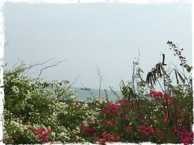 Strand och blommor klar